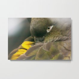Burrowing Parrot Metal Print