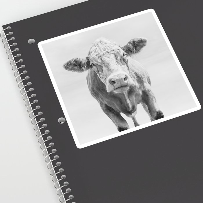 Animal Photography   Cow Portrait Minimalism   Farm animals   black and  white Sticker by wildhood