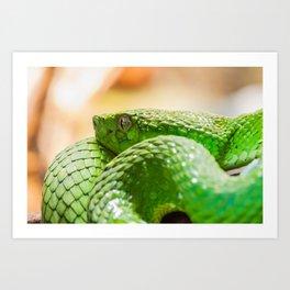 Coiled green snake Art Print