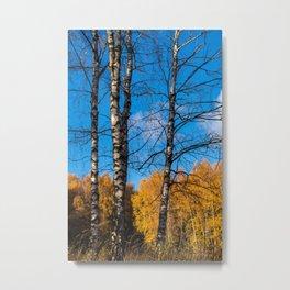 4 birches Metal Print