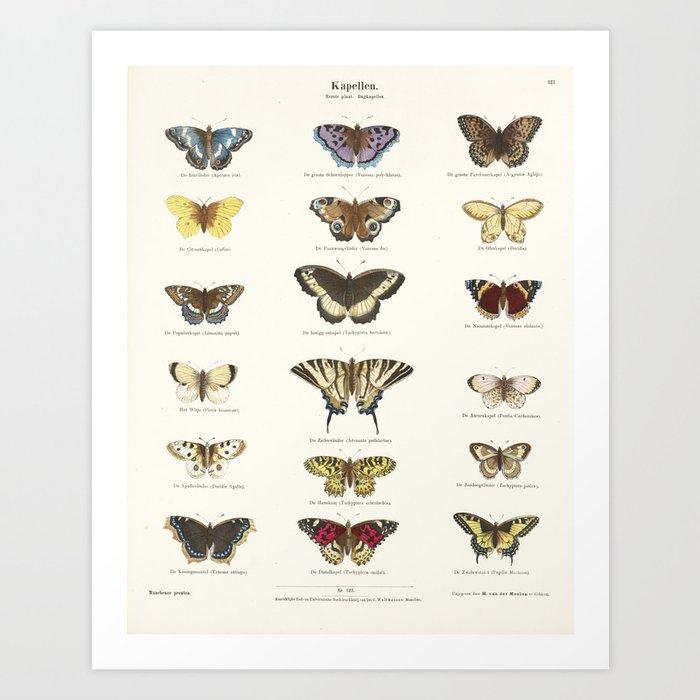 Vintage Butterfly Chart Kunstdrucke