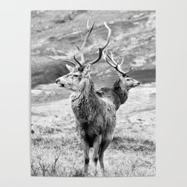 Stags - b/w Poster