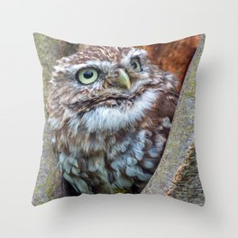 close up owl in the hole Throw Pillow