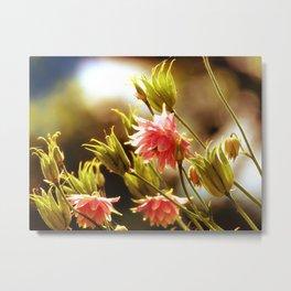 Wild beauty, flowers in the meadows Metal Print