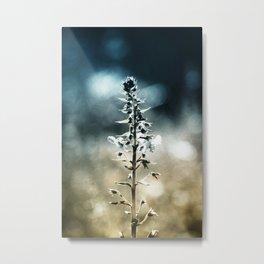 Ametrin Metal Print