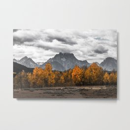 Teton Fall - Autumn Colors and Grand Tetons in Black and White Metal Print