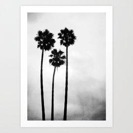 Palm Tree Noir #29 Art Print