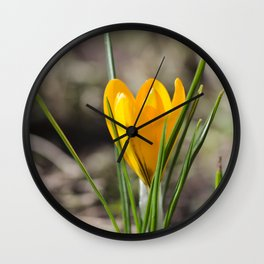 Yellow crocus flower Wall Clock