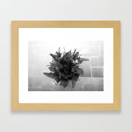 """""""Flowers seem intended for the solace of ordinary humanity."""" ~ John Ruskin Framed Art Print"""