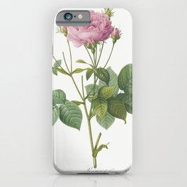 Rosa gallica granules also known asRosebush of France with Pomegranate from Les Roses (1817-1824) by iPhone Case