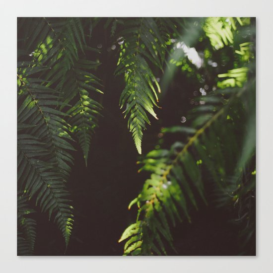 Ferns of Emerald Canvas Print