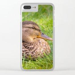 Female Mallard Duck Clear iPhone Case