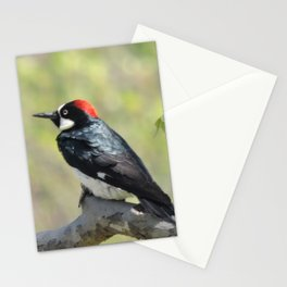 Acorn Woodpecker At Rest Stationery Cards