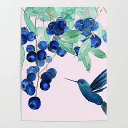 blueberry and humming bird Poster