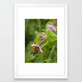 The Pollinator Framed Art Print
