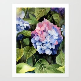 Hydrangea IV Art Print