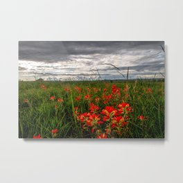 Brighten the Day - Indian Paintbrush Wildflowers in Eastern Oklahoma Metal Print