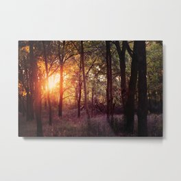 golden hour forest Metal Print