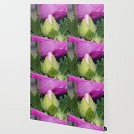 Musk Mallow Bud Wallpaper