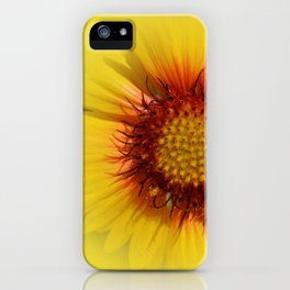 Flowers: Kissed by the sun sunflower iPhone Case