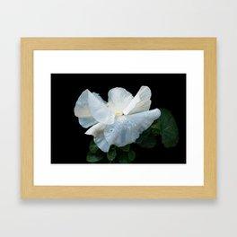 White as spring Framed Art Print