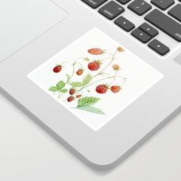 Wild Strawberries Sticker