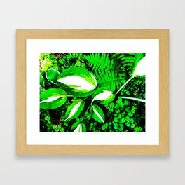 hosta2 Framed Art Print