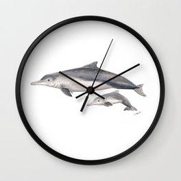 Australian humpback dolphin (Sousa sahulensis) with baby Wall Clock