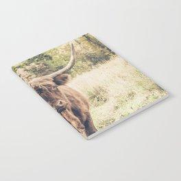 Highland scottish cow cattle long horn Notebook