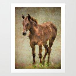 Young Horse Art Print