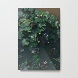 Water Lilies IV Metal Print