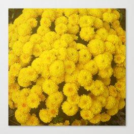 Autumn Gold - Chrysanthemums Canvas Print