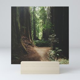 Redwood Trail Mini Art Print