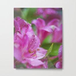 Pink Hibiscus Closeup Metal Print