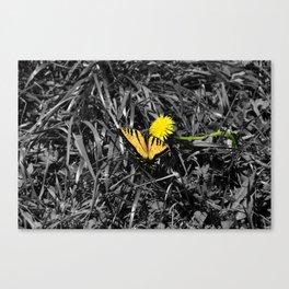 Selectivecolor Butteryfly Canvas Print