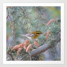 A Townsend's Warbler Spruces Up Art Print