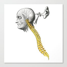 spinal column Canvas Print