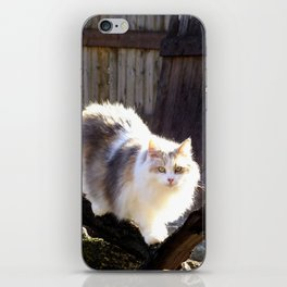 The Beautiful Maine Coon Dilute Calico iPhone Skin
