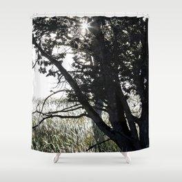 Grass Glowing Beneath A Tree Shower Curtain