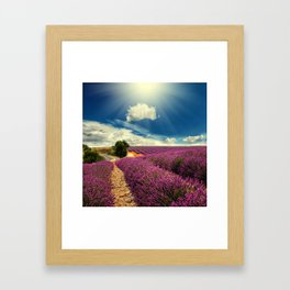 Beautiful image of lavender field Framed Art Print