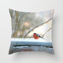 Red Plumage - Bullfinch male - #decor #society6 #buyart Throw Pillow