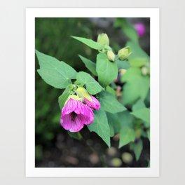 Pink-purple flower in Butchart's garden Art Print