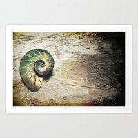 shell Art Prints featuring Shell by KunstFabrik_StaticMovement Manu Jobst