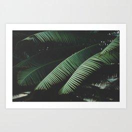 Night in the Tropics Art Print
