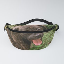 Dog Fanny Pack