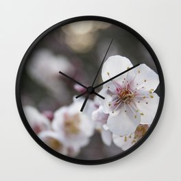 The Early Cherry Blossom Wall Clock