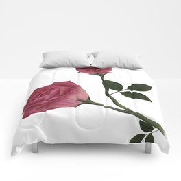 Mystical Maroon Rose Comforters