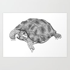 Little tortoise Art Print