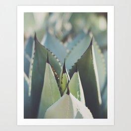 Agave photograph Art Print
