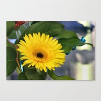 you are my sunshine Canvas Prints featuring Sunshine  by IowaShots